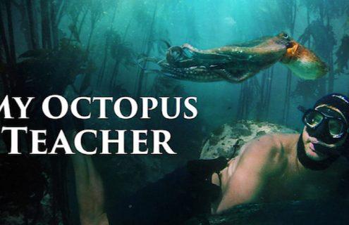 My Octopus Teacher Naslovna